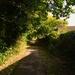 Shady footpath