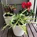 New Plants 🌱