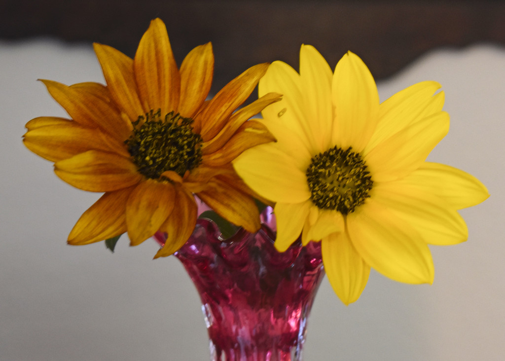Final Two Sunflowers of the Season by bjywamer