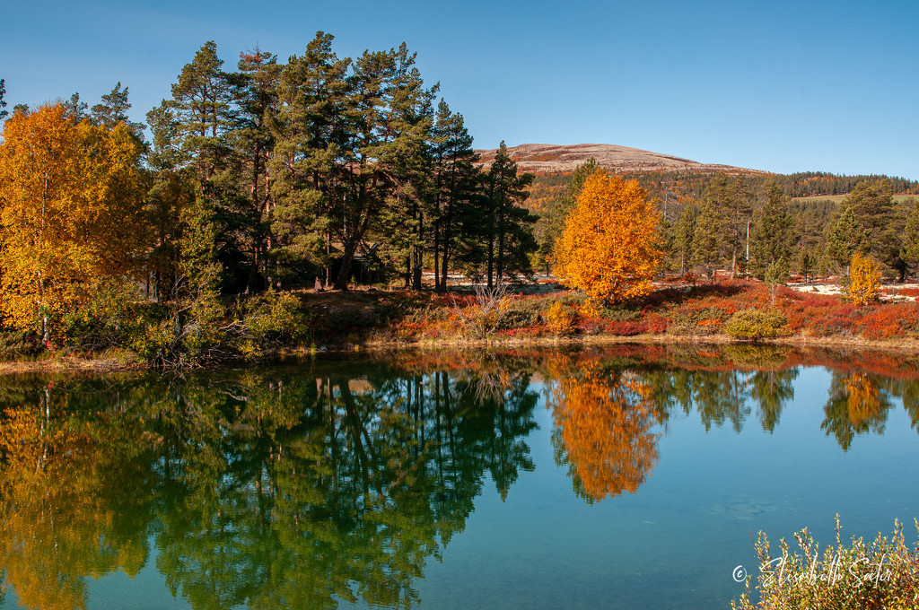 Autumn reflections by elisasaeter