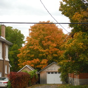15th Oct 2020 - Autumn Colours, just before the Rain