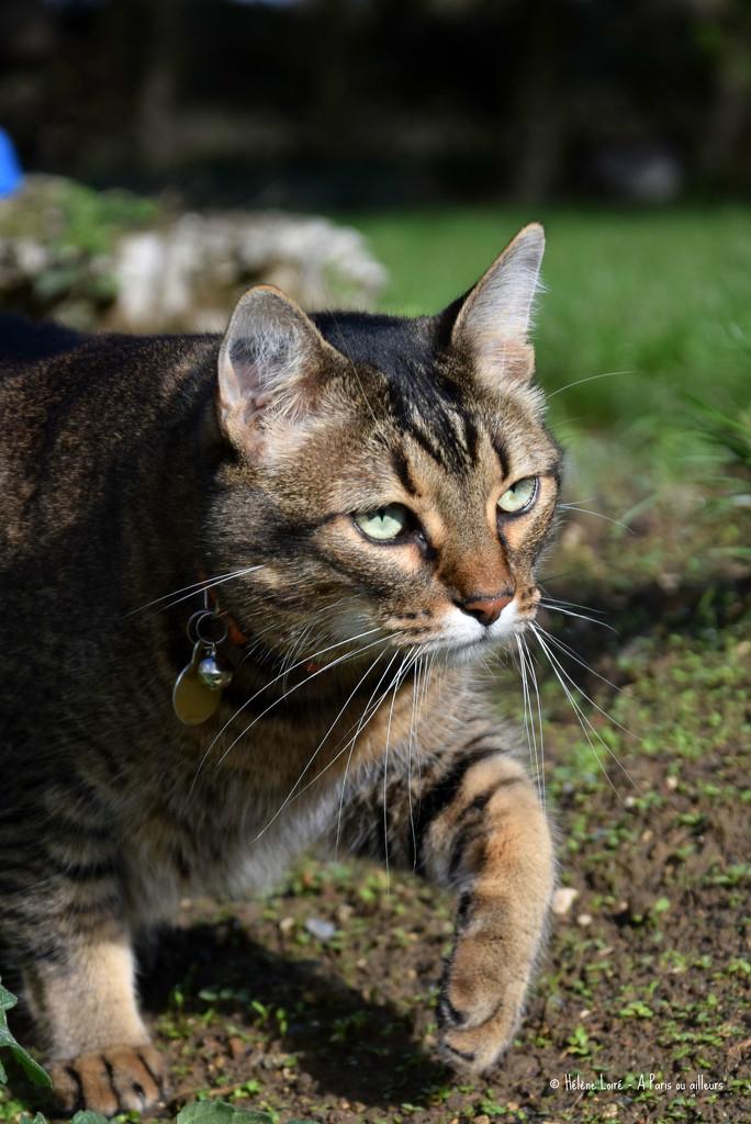 Feline by parisouailleurs