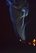 15th Oct 2020 - My Latest Flame...