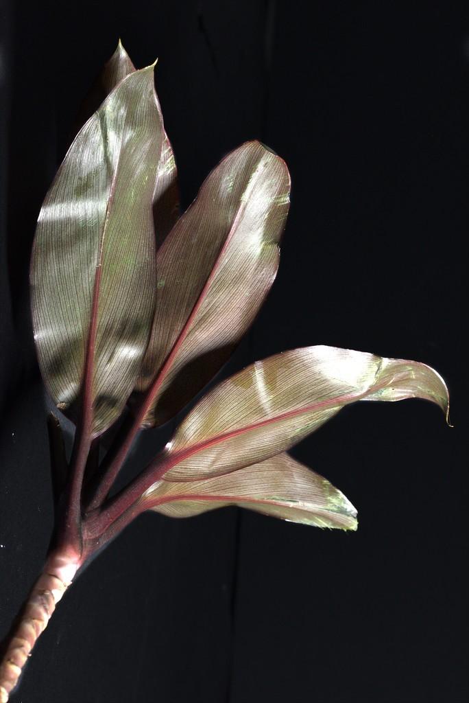 Underneath the Leaves by 30pics4jackiesdiamond