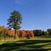 More Autumn Golf