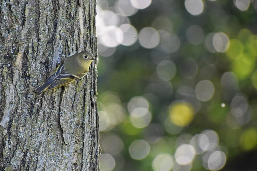 Flycatcher by mhei