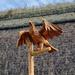 Wooden eagle.