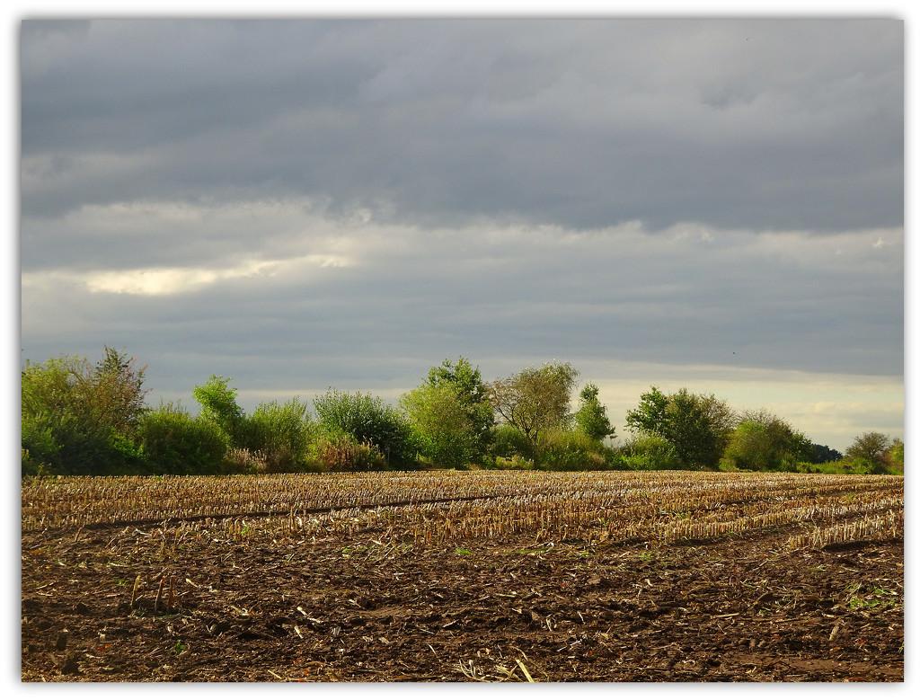 a lovely autumn afternoon by gijsje