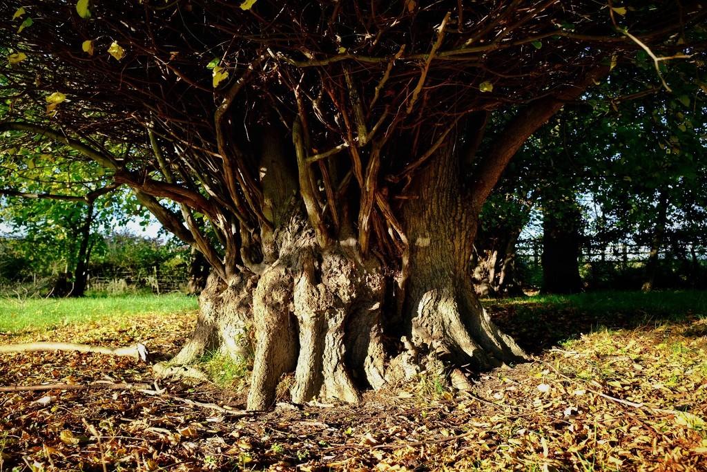 Wonky Wood by photopedlar