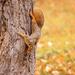 a squirrel!