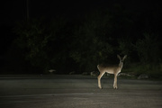 15th Oct 2020 - 03 - Like a Deer in the Headlights