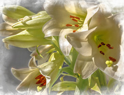 16th Oct 2020 - St Josephs Lilies