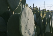 7th Oct 2020 - Morning Dew on my Cactus
