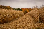 15th Oct 2020 - Fall color...pure Michigan