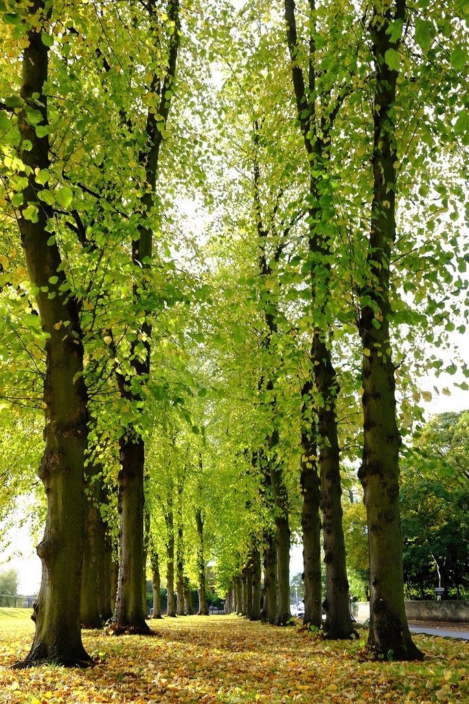 The beauty of Autumn in the Park by allsop