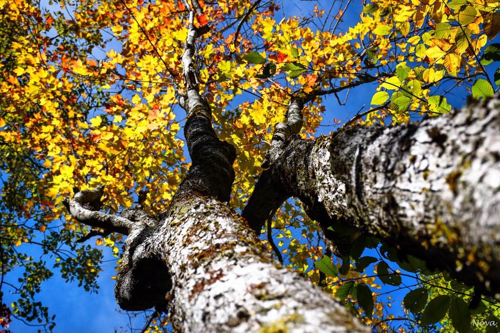 Autumn colours by novab