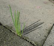 13th Oct 2020 - Grass