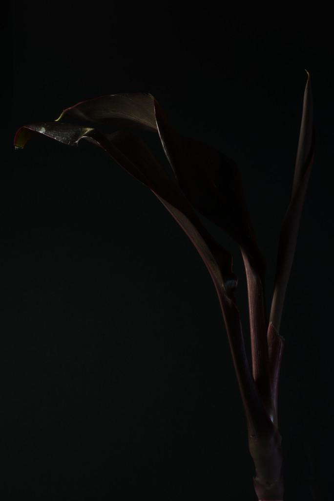 Dark Leaf by 30pics4jackiesdiamond