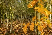 16th Oct 2020 - Autumnal Wood