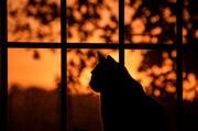 13th Oct 2020 - Cat Sunrise