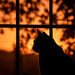 Cat Sunrise by kareenking