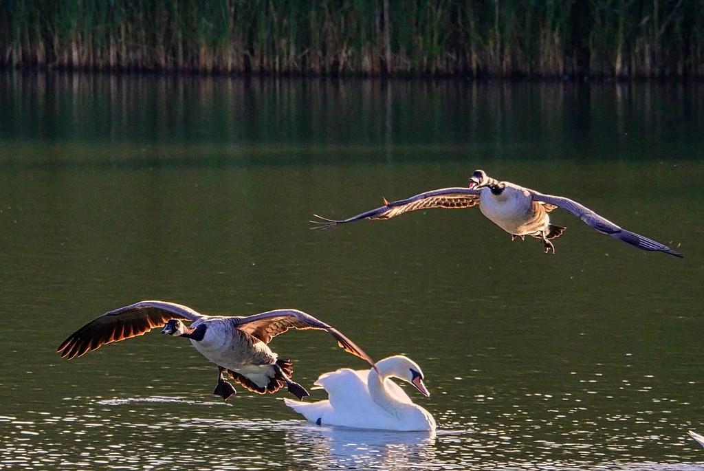 Landing. by tonygig