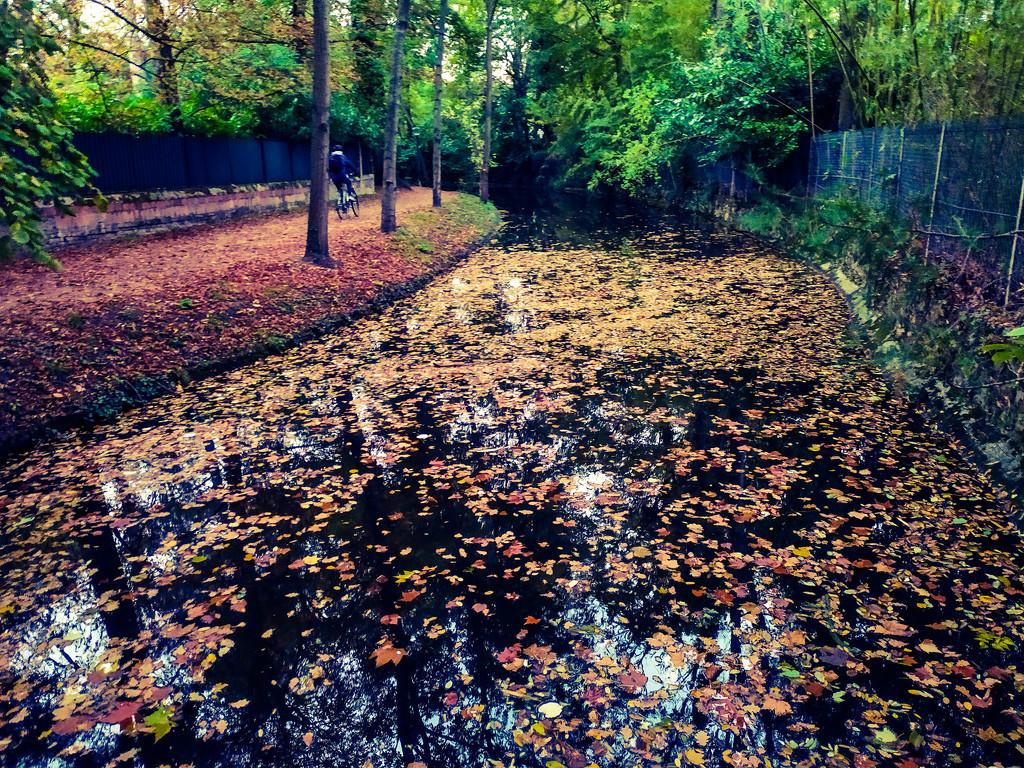 Feeling Fall by dustyloup