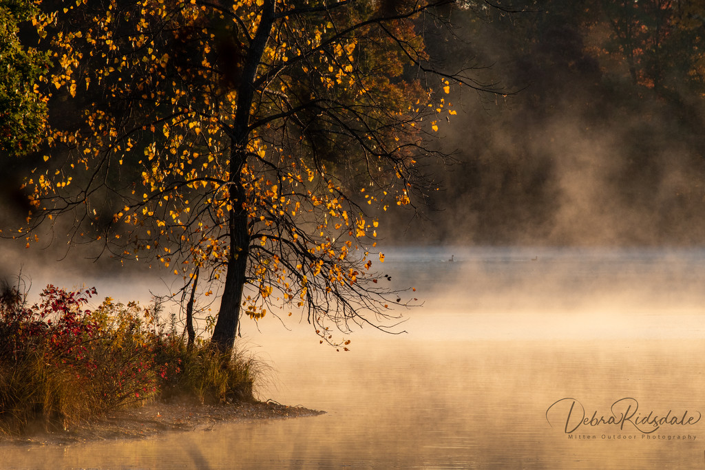 Sunrise & Fog by dridsdale