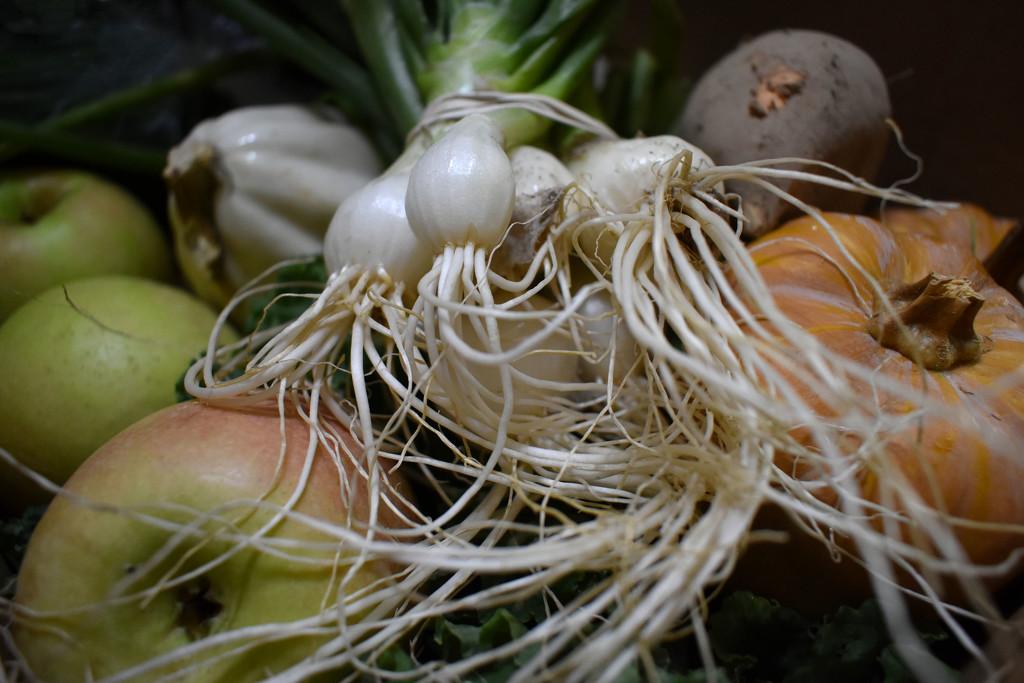 Harvest by homeschoolmom