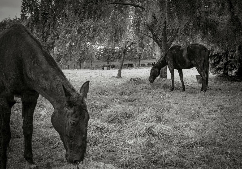 Horses by vignouse