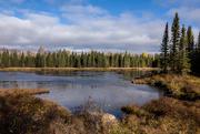 16th Oct 2020 - Beaver Lodge
