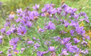 6th Oct 2020 - Smooth Aster