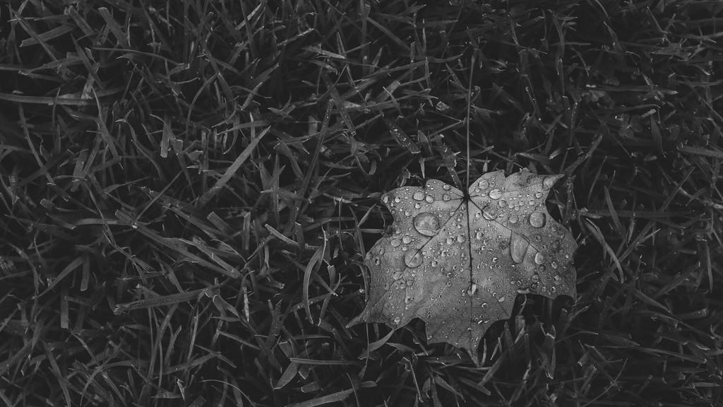 Fall' In Rain by ramr