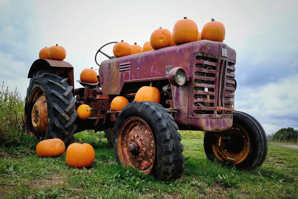 Pumpkins  by photopedlar