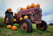 16th Oct 2020 - Pumpkins