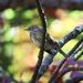 Warbler Season