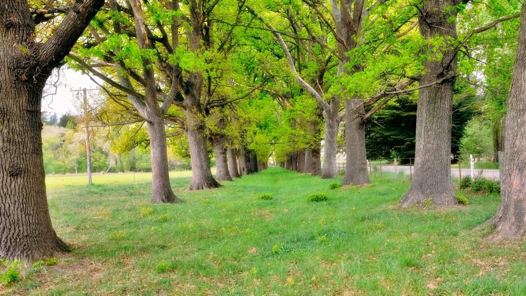 Old Oak plantings by maggiemae