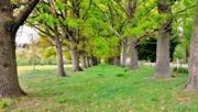 17th Oct 2020 - Old Oak plantings