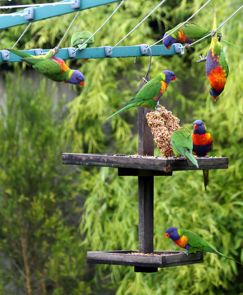 And today, gymnastics at the feeder! by gilbertwood