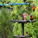 And today, gymnastics at the feeder!