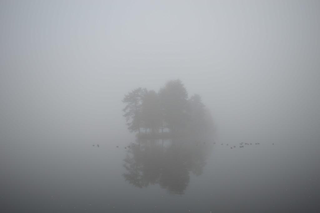 fog & fowl by didi