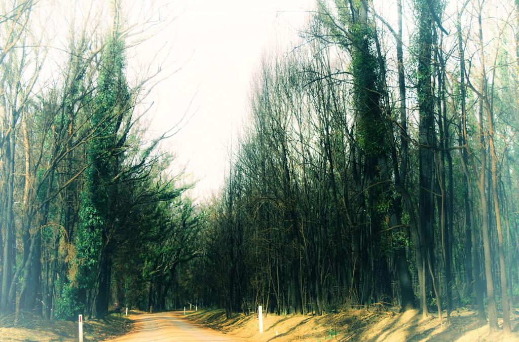 Roads Taken-18 by annied