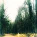 Roads Taken-18