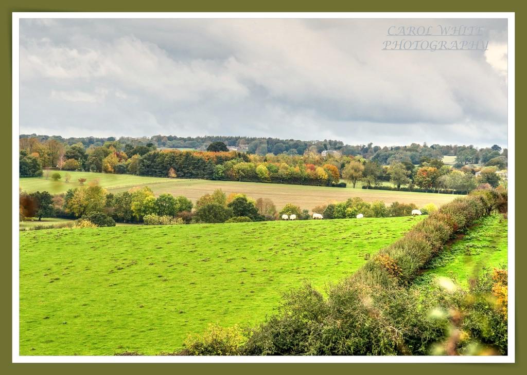 Autumn Landscape by carolmw