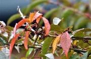 17th Oct 2020 - Autumn colour tones