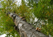 17th Oct 2020 - Signs of autumn