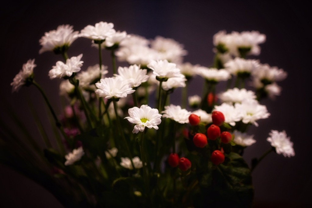 Red & white by romainz