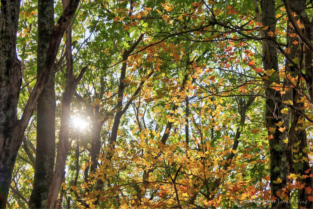 Y11 1017 Sun Through the Trees by cirasj