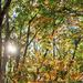 Y11 1017 Sun Through the Trees