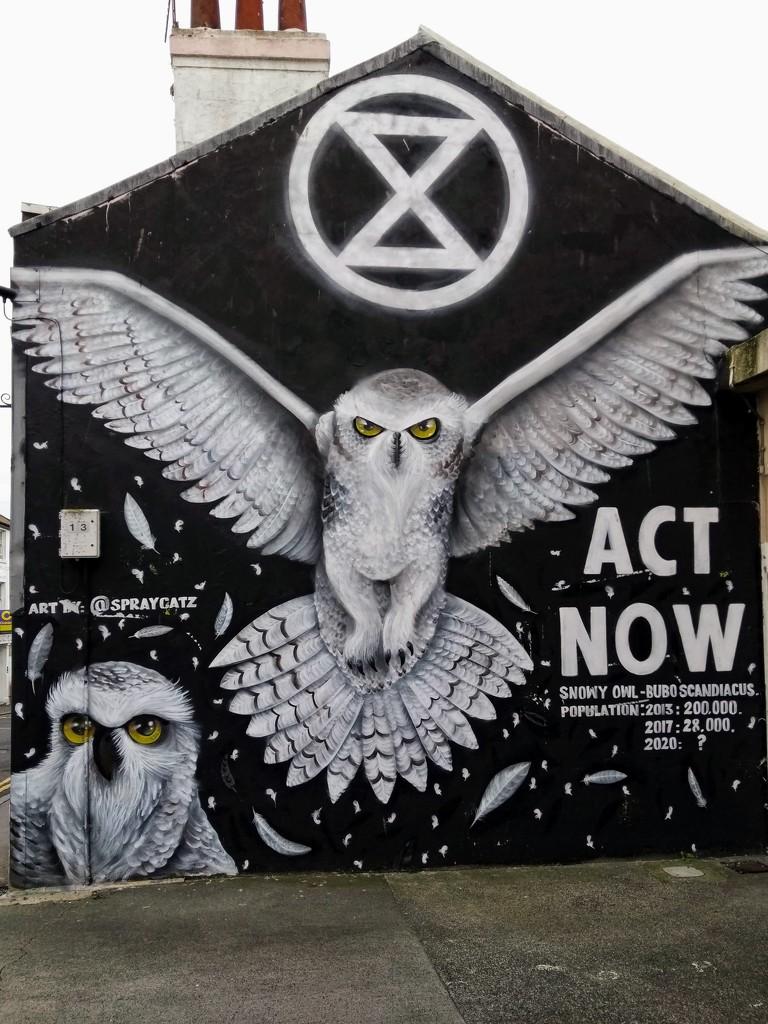 Snowy Owl by 4rky